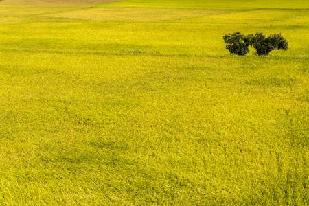 Rice field with Blue sky and cloud, Taiwan eastern. Reklamní fotografie