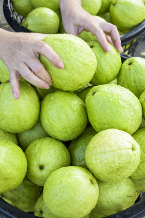Guava selling at market Stock Photo