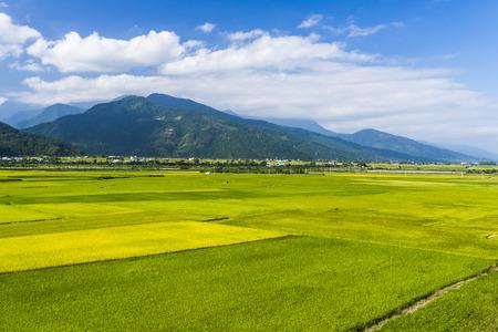 Rice field with Blue sky and cloud, Taiwan eastern. Foto de archivo