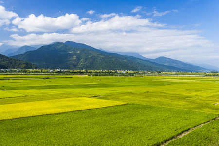 Rice field with Blue sky and cloud, Taiwan eastern. Stok Fotoğraf