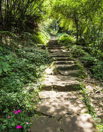 Stone stair in green forest Stock Photo