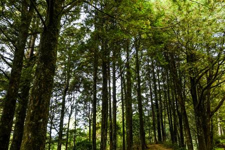 Beautiful green forest Stock fotó