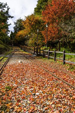 Alishan Forest railway in Taiwan