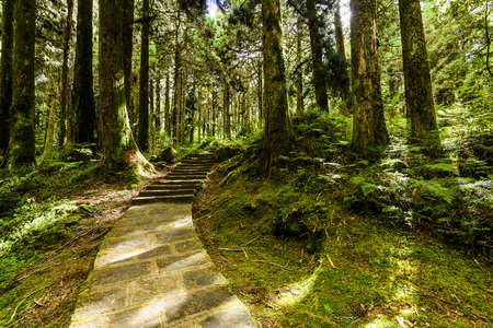 Stone stair in green forest Imagens