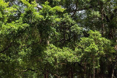 Lush green trees in the forest
