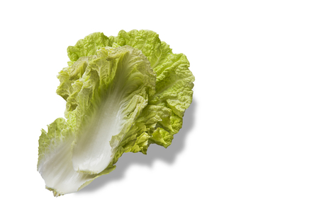 nappa: Napa or Nappa cabbage solid on white background. Chinese cabbage, Brassica pekinensis