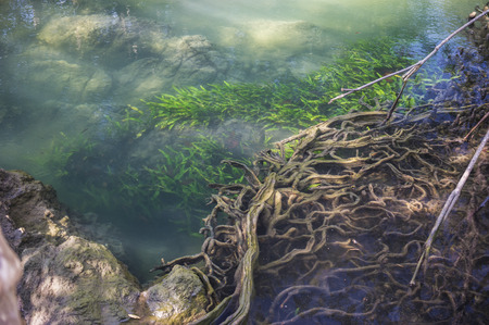 람 사르 습지대에있는 맹그로브 나무 숲 크라비, 태국의 습지 스톡 콘텐츠