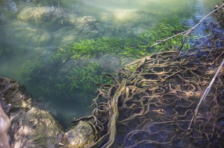 Mangrove tree forest on Ramsar site Wetlands in Krabi, Thailand 版權商用圖片 - 74094786
