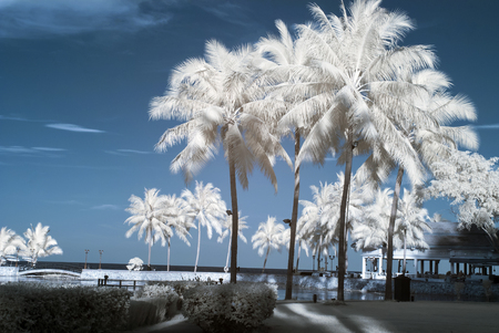 Near Infrared or IR photo panoramic view of sea and coconut palm tree Stock Photo