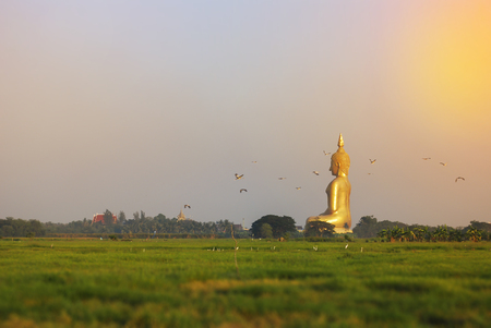 Panorama view of Golden big Bhuddha statue locates among the green field and white birds flying at Wat Muang (Muang temple), Thailand Banco de Imagens