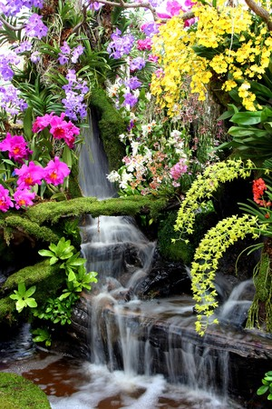 background waterfalls: Water fall and flower in Thailand