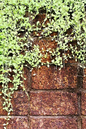 Wall stone texture with green leaf  photo