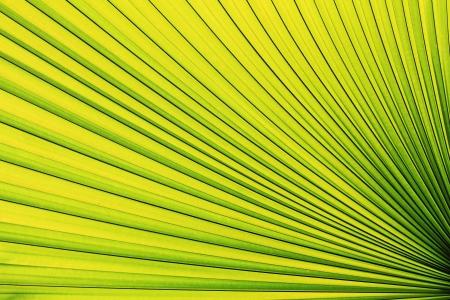 grüne Palm leaf