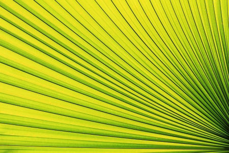 foliage frond: green palm leaf Stock Photo