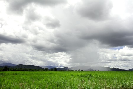 Landscape with rain over sugar cane field