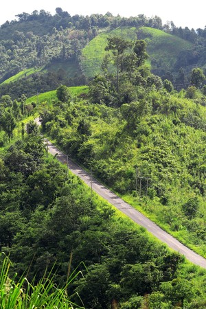road in deep forest Stock Photo - 7652061