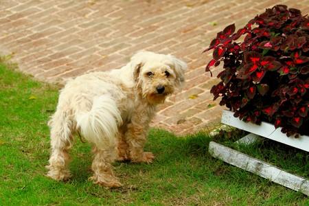 White dog in garden photo