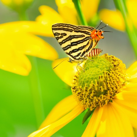 butterfly on flower photo