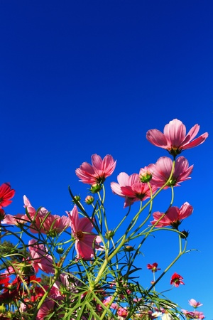 spring flower and blue sky Stock Photo - 9857831