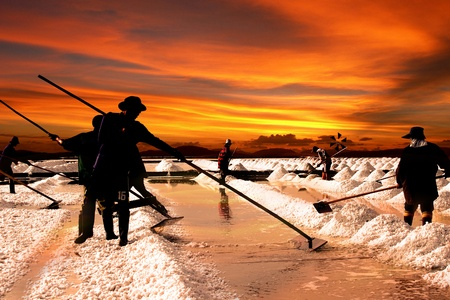 mineral salt: Salt farm in Thailand