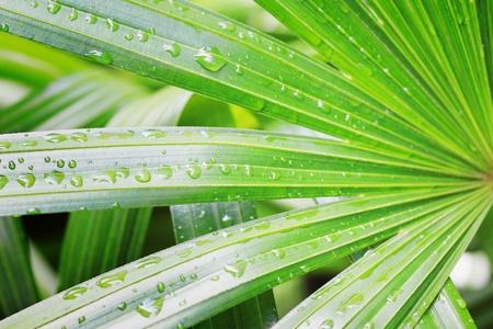 potable: water drop on green leaf