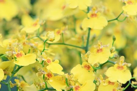 carpel: Beautiful Orchid in garden