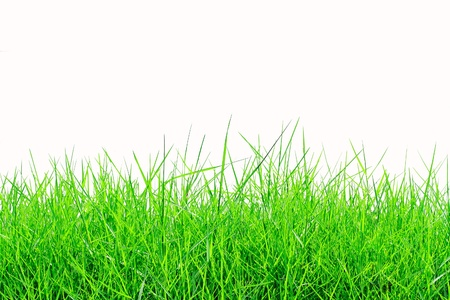 grass close up: Fresh spring green grass isolated on white background