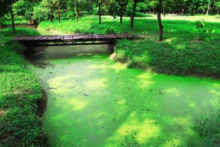 Green garden and wooden bridge Stock Photo - 10384394