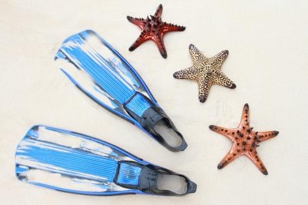 fish star: estrellas de mar en la playa
