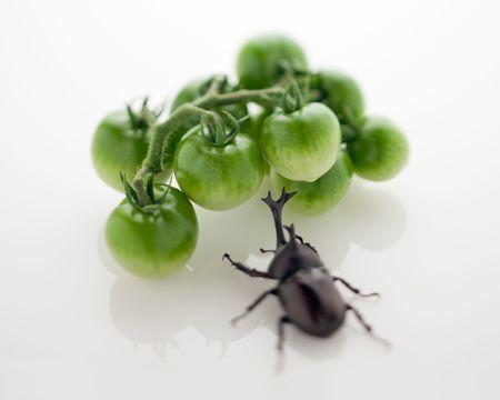 カブトムシとグリーン トマト