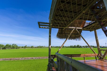 Green-yellow rice fields and blue skies in Thailand