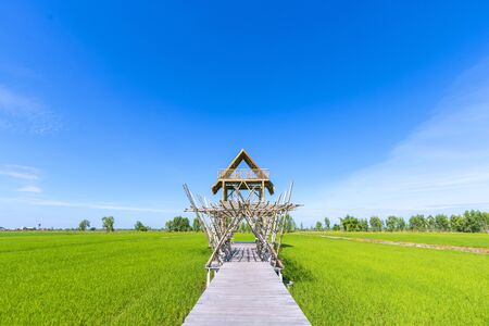 Bamboo pavilion in the rice fields and beautiful natural scenery.