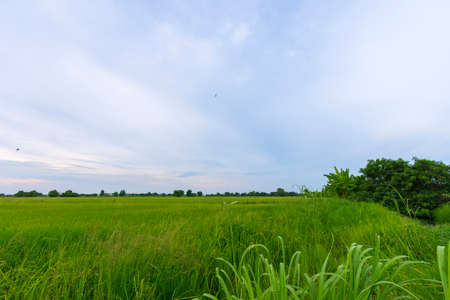 Vast green rice fields and beautiful natural scenery in Thailand Reklamní fotografie - 151152293