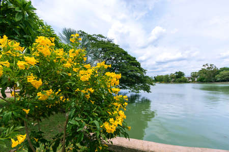 Yellow flowers blooming beautifully with clear skies. Stock fotó