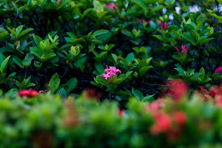 Flowers that are not red with a blurred green background Stock fotó