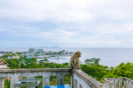 A monkey sitting on a wall with a view of the sea and sky behind Khao Sam Muk in Chonburi Province in Thailand.