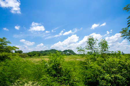 The blue sky and rice fields in Thailand. Reklamní fotografie