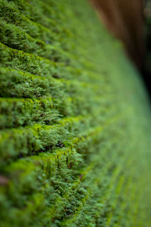 Small moss on a brick wall at Wat Umong, Chiang Mai Province in Thailand Imagens