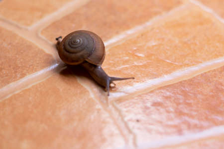 The snail is walking on the brown pattern tiles