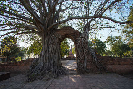 The temple arch has covered the roots of Bodhi trees for hundreds of years. Has been called 'Gate of Time' at Phra Ngam Temple, Mueang District, Phra Nakhon Si Ayutthaya Province.
