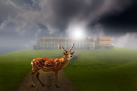deer in front of a building Stock Photo