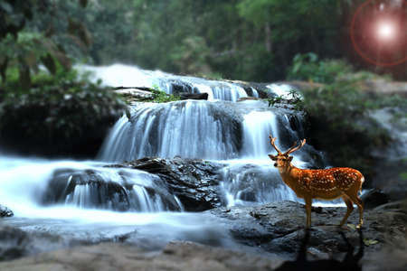 deer at waterfall in thailand photo