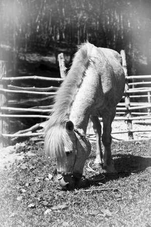 back and white donkey