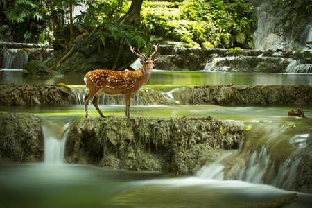 deer at waterfall