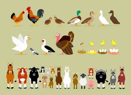Cute Cartoon Farm Animal Characters waaronder Vogels Kip, Haan, Bruin kwartels, wilde eenden, eenden, gans, duif, Barbarijse eenden, Turkije, ook de baby en de eieren van de kwartel, kip, eend en gans en Zoogdieren