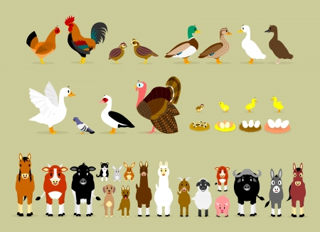 Cute Cartoon Farm Animal Characters including Birds  Hen, Rooster, Brown Quails, Mallard Ducks, Domestic Ducks, Goose, Pigeon, Muscovy Duck, Turkey, also Baby and the eggs of Quail, Chicken, Duck, and Goose  and Mammals