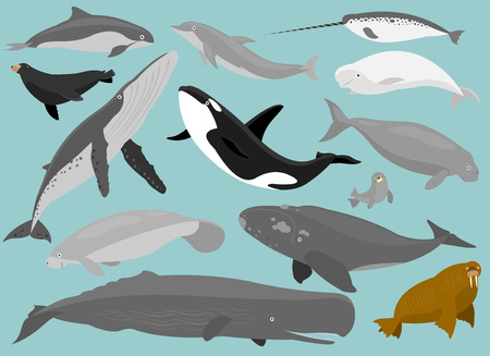 13 Marine Mammals in simplified flat cartoon  矢量图像