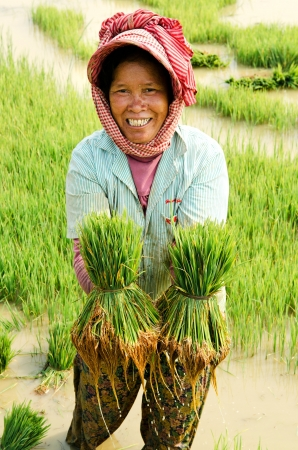 CF7JE5 smiling farmer woman working in asian rice field paddy cambodia Stock Photo - 13512556