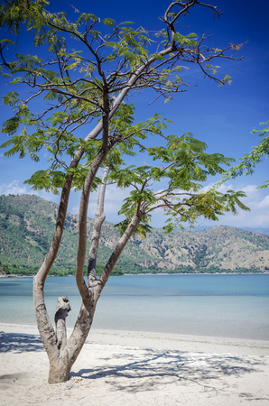 areia branca tropical beach view and coast near dili in east timor Imagens