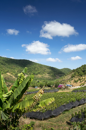 rural valley landscape with organic pepper farm near kampot cambodia